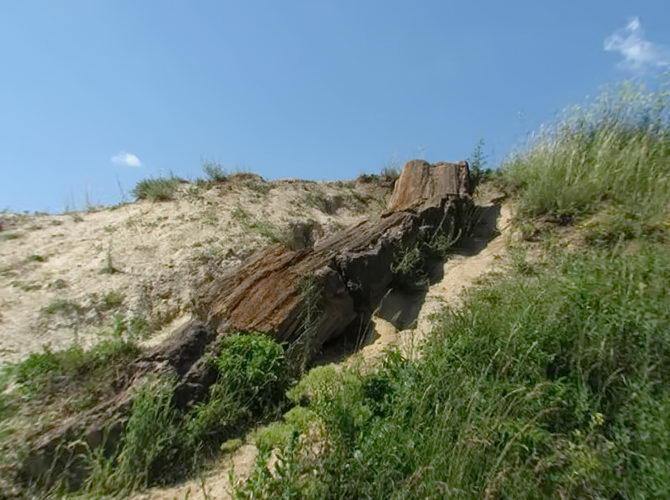 Дружківський кам'яний ліс