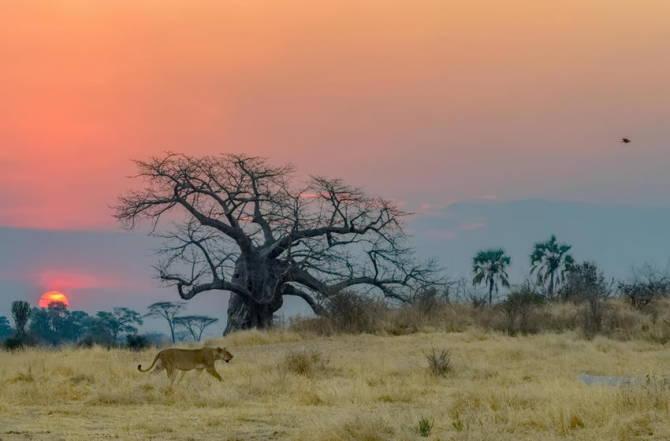 Національний парк Руаха, Танзанія