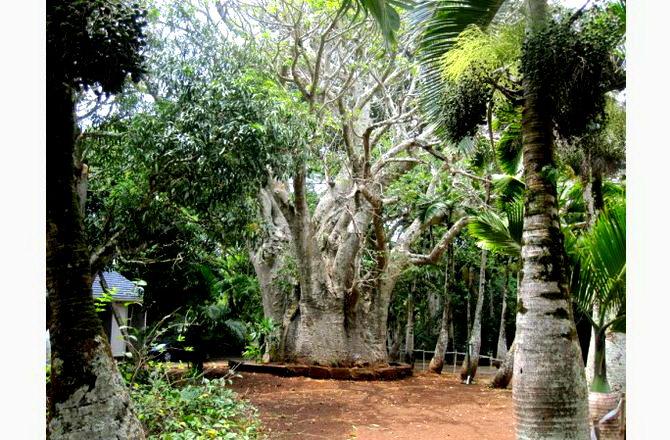 Ботанічний Сад Памплемус