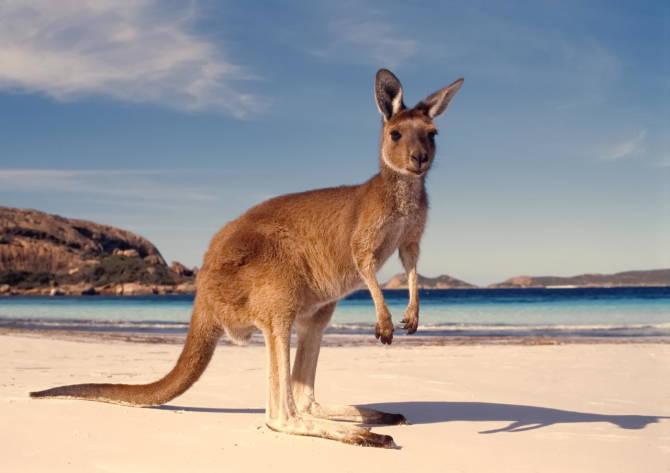 трохи про Австралію
