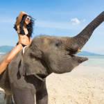Катання на слонах: нешкідлива розвага або знущання з тварин?
