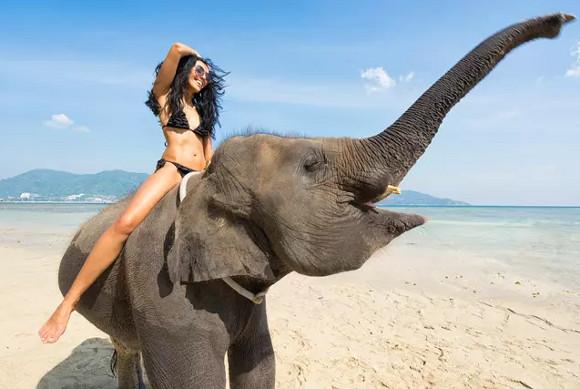 катання на слонах