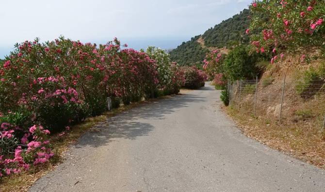 Мальовнича дорога до монастиря
