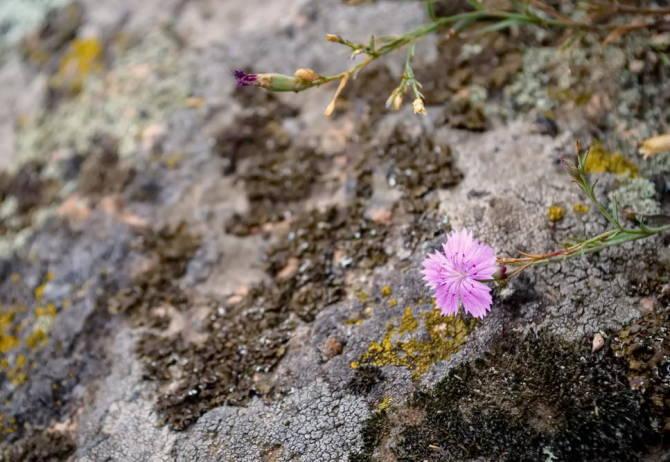 Місцева флора Актівського каньйону