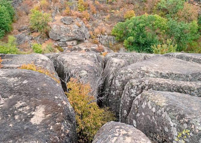 дерева ростуть прямо серед каменів
