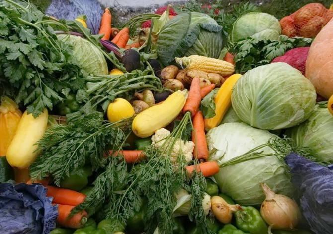 овочеві культури з якісного насіння