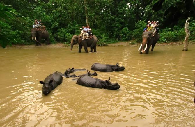носороги в національному парк Чітван