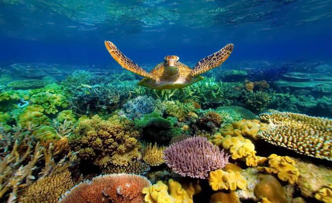 красоти Великого Бар'єрного рифу