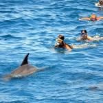 Туристам сподобався новий дельфінарій в Хургаді
