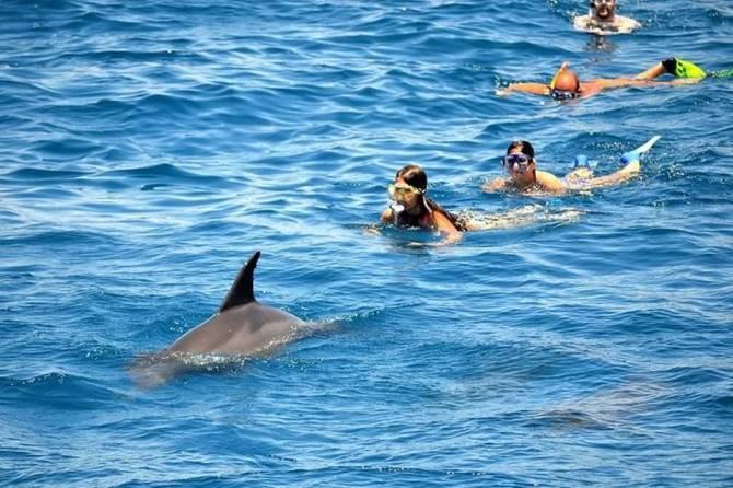 дельфінарій в Хургаді