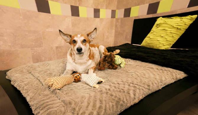 готель для домашніх тварин