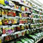 Як вибрати якісне насіння на розсаду