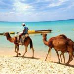 Туніс: падіння динара спровокувало зростання турпотоку на 13.9%